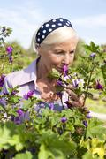 Germany, Saxony, Senior woman smelling the flower - stock photo