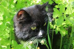 Black cat with white tie in the bush Stock Photos
