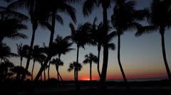 Florida Sunrise Time Lapse Palm Stock Footage