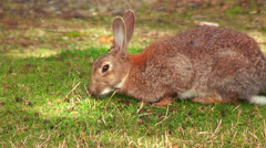 A cute bunny sits in the grass. Stock Footage