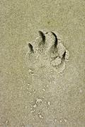 Belgium, Bruges, West Flanders, Close up of dog paw print on sand - stock photo