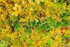 Stock Photo of High Altitude Algae And Mosses Llanganates National Park Ecuador