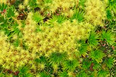 High Altitude Algae And Mosses Llanganates National Park Ecuador Stock Photos