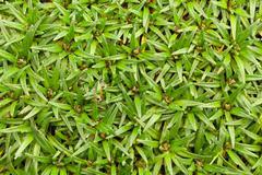 High Altitude Algae And Mosses Llanganates National Park Ecuador Stock Photos