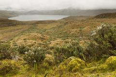 Pisayambo Lagoon Llanganates National Park Andes Mountains Ecuador - stock photo