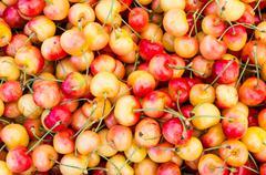 fresh queen anne cherries on display - stock photo