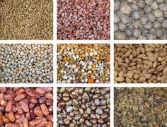Collection of dried and mixed nuts Stock Photos