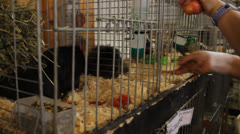 Feeding animals - stock footage