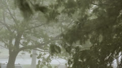 Heavy Storm Trees - Heavy precipitation rainstorm Stock Footage