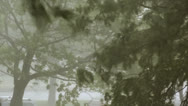 Stock Video Footage of Heavy Storm Trees - Heavy precipitation rainstorm