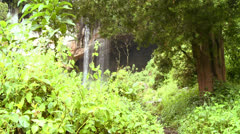 Backpackers approach a tropical waterfall. Stock Footage