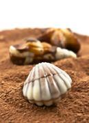 chocolate seashell isolated  on the white background - stock photo