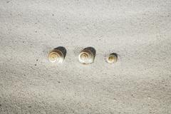 Sea-snail shells in sand Stock Photos