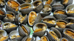 Steamed sea shell isolated on white background Stock Footage