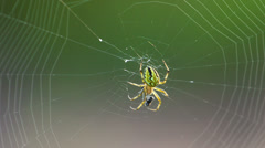 Extreme closeup of spider and web. Shot in RAW, wide dynamic range Stock Footage