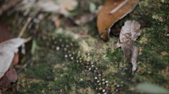 Ant colony moving their nest Stock Footage