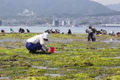 People collecting shellfish, miyajima, japan Stock Photos