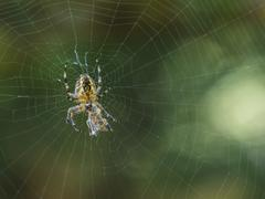 Spider with its prey. Stock Photos