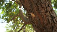 Cicada skin on a tree Stock Footage