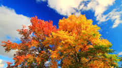 Autumn landscape Stock Footage