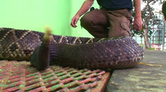 A rattlesnake is poised and ready to strike a man who approaches. Stock Footage