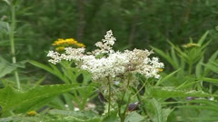 Flower in a mountain forest Stock Footage