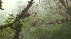 Fog and mist blows through a mountaintop rainforest in Costa Rica. Stock Footage