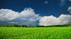 Summer landscape, green meadow, sky and clouds. Stock Footage