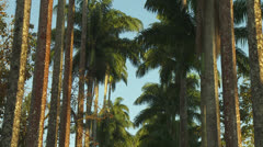 Tilt Up of Palm Trees in the Botanical Garden Stock Footage
