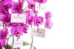 phalaenopsis - stock photo