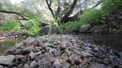 Small fast mountain river with a scattering of stones ashore Stock Footage