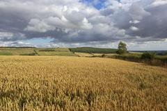 yorkshire wolds agriculture - stock photo