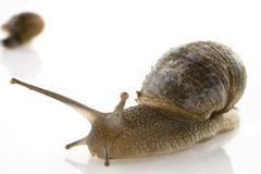 Slow snail Stock Photos