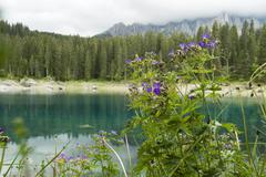 Stock Photo of geranium by lake in mountains