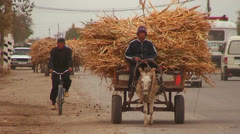 A donkey cart travels on a road in Uzbekistan. - stock footage