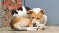 Dog and cat. Friendship forever. Stock Footage