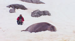 A man photographs an elephant seal on an icefield in the Arctic. Stock Footage