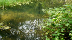 Forest backwater 01 Stock Footage