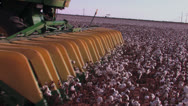 Stock Video Footage of Cotton stripper tines