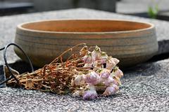 Kuiva kukkia hauta Kuvituskuvat