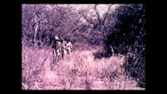 Stock Video Footage of Hunting party tracking water buffalo, Tanzania 1937