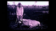 Stock Video Footage of Hunter posing with roan antelope, Tanzania 1937