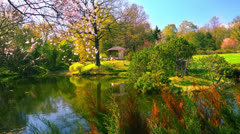 Japanese garden at sacura blossoming time. Stock Footage