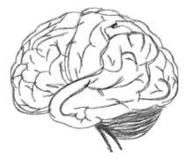 Drawing brain closeup on white background Stock Illustration