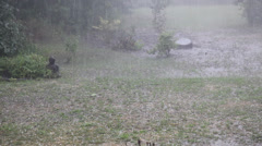 Rain and hail storm in garden - stock footage