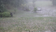 Stock Video Footage of Rain and hail storm in garden