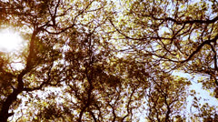 Sun blazing through the swaying tree branches. Stock Footage