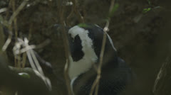 Penguin in the shade Stock Footage