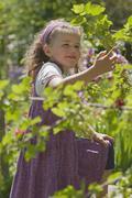 Stock Photo of Germany, Baden Wurttemberg, Ueberlingen, Girl (4-5) picking berries, smiling,
