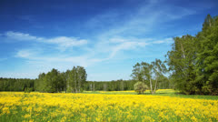 Summer nature, field, forest sky and clouds landscape, time-lapse. - stock footage